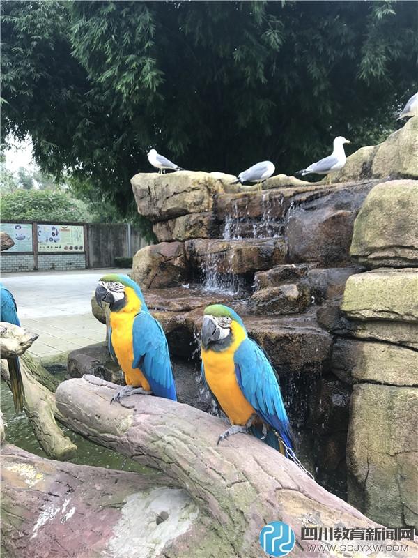 金沙小学社区活动:冬日畅游鸟语林 共叙护鸟新体验