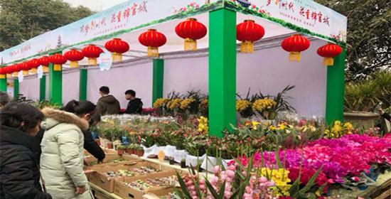玩转花卉节 天府迎春赏花节本月25日开幕