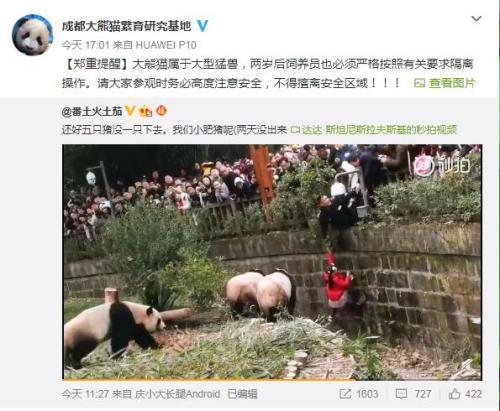 女童看熊猫掉进饲养池 成都大熊猫繁育研究基地回应