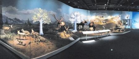 300余件动物标本在成都博物馆亮相