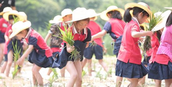 玉林附小二年级社会实践活动:芒种插秧