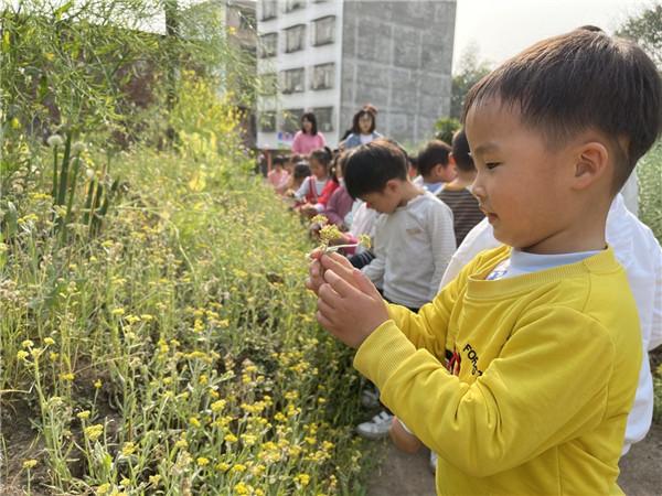 水清幼儿园开展踏青活动